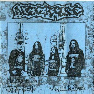 Necrose подбор песен на гитаре